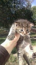 Отдам в дар котят