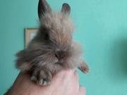 Продаются милые декоративные крольчата!